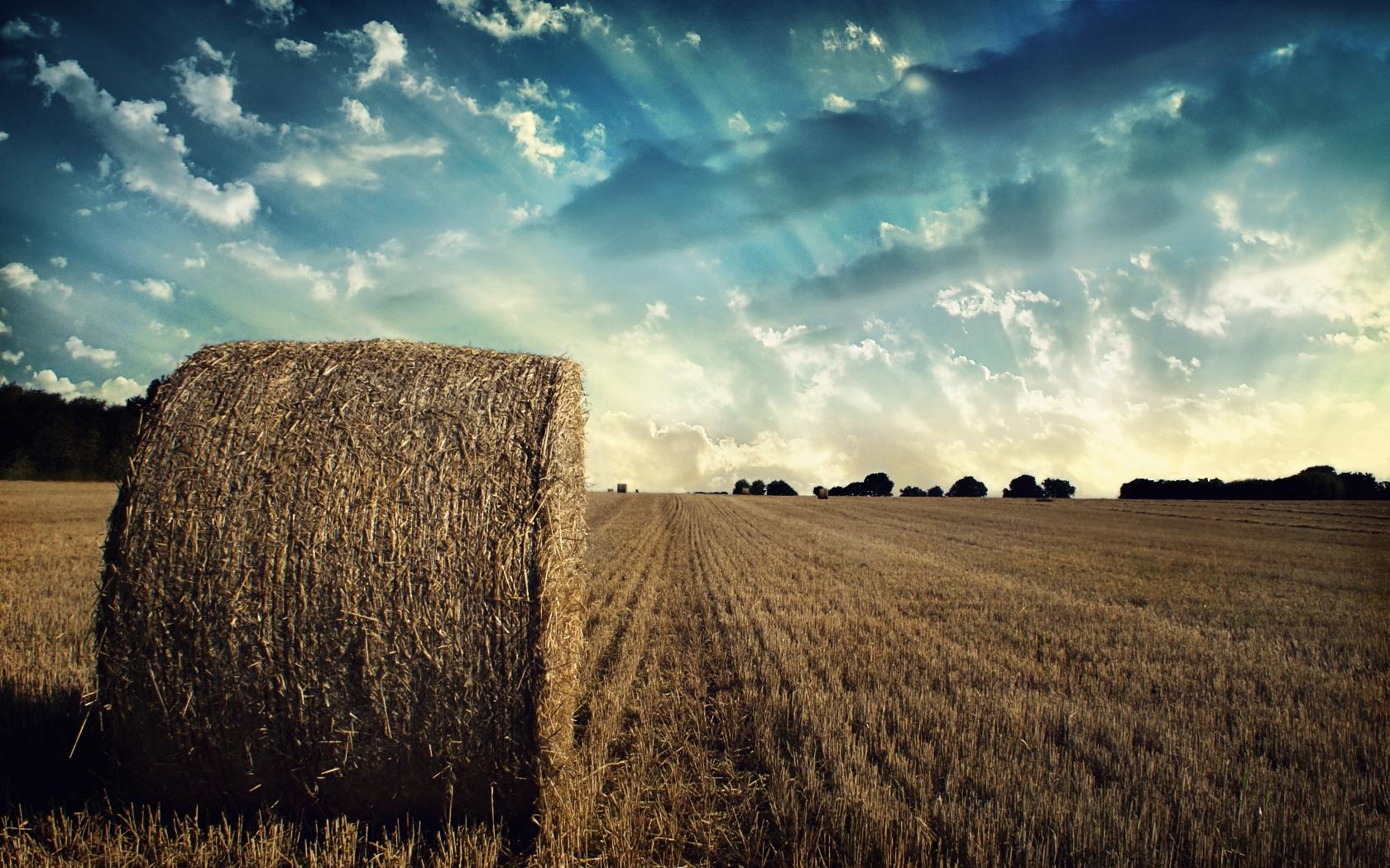 Поздравление день работника сельского хозяйства 46