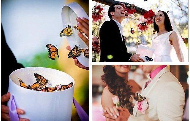 Поздравление на свадьбу прикольные с вручением подарков 66