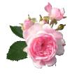 Поздравление с днем матери в стихах всем матерям 190