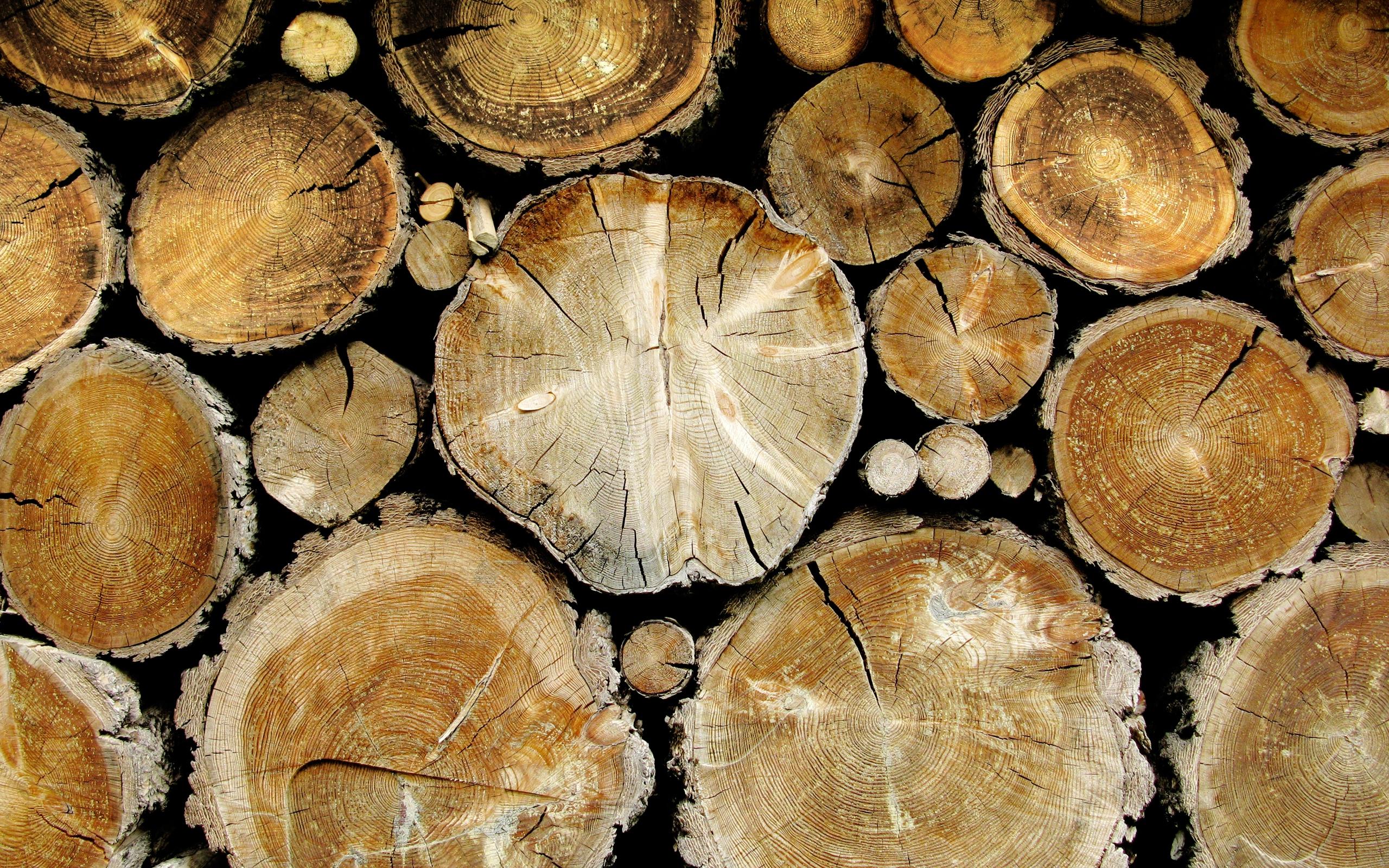 Поздравления с днем работника леса в открытках 159