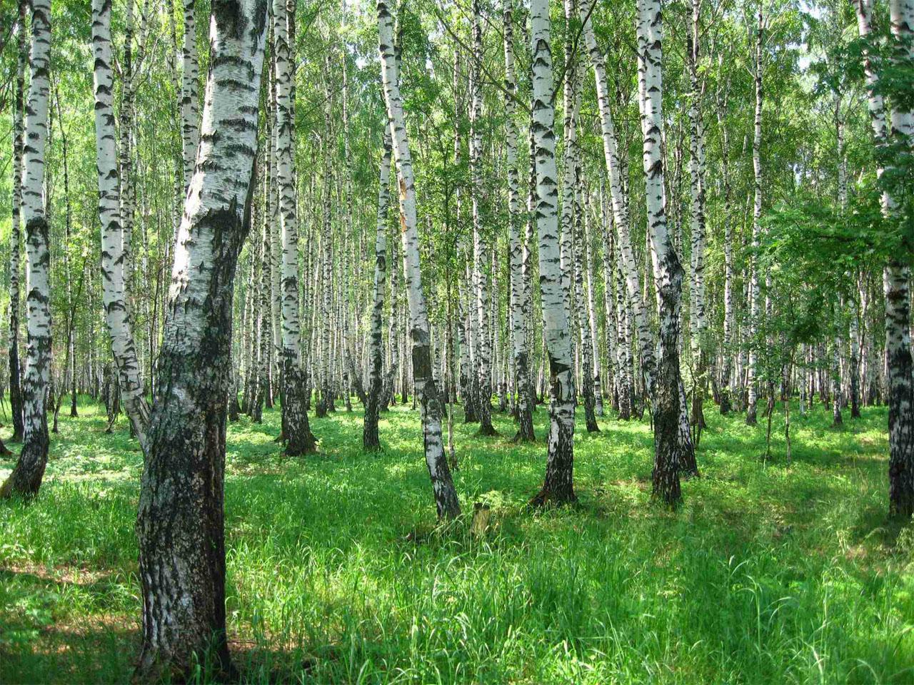 Поздравления с днем работника леса в открытках 81