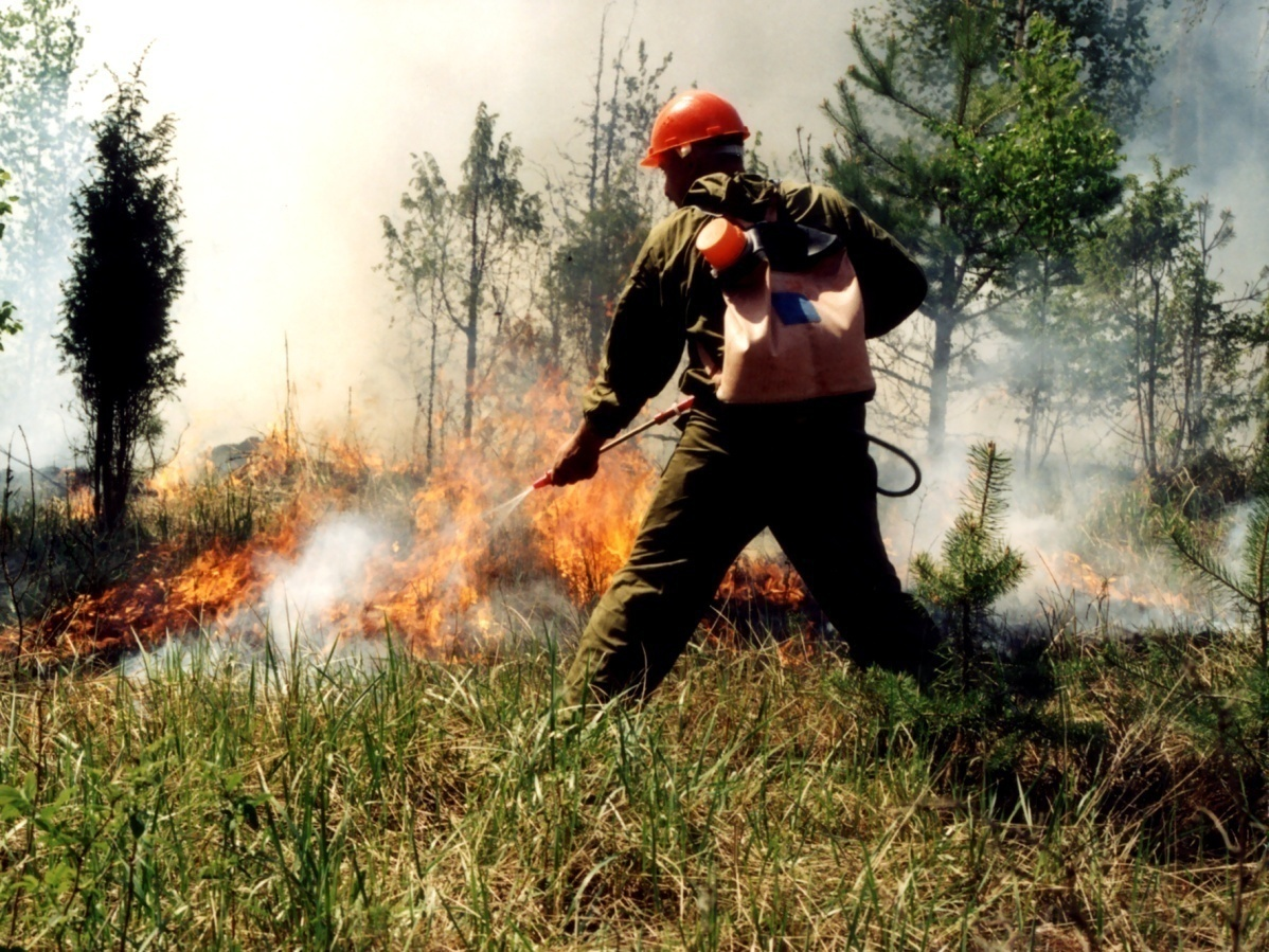 Поздравления с днем работника леса в открытках 83