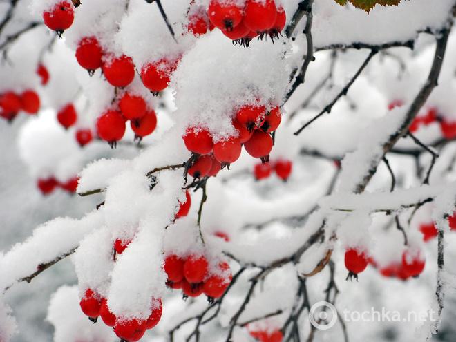 Поздравления с первым снегом 187